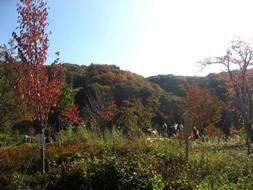 藤原明川の里も紅葉