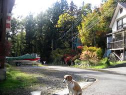 秋色の中のカカオ