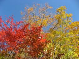 坤六峠付近の紅葉