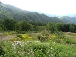 宝台樹 やすらぎの森 自然花苑